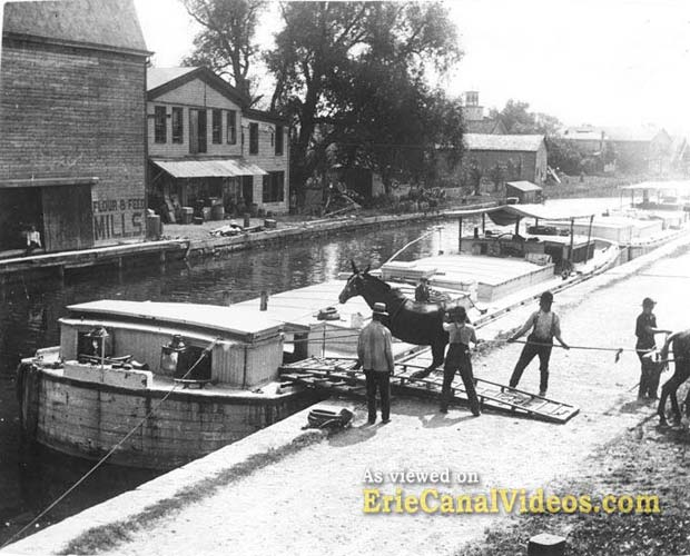 erie canal mules